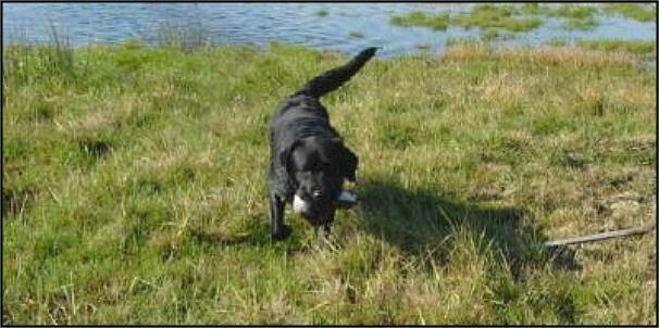 Drycreek Labradors Black Lab