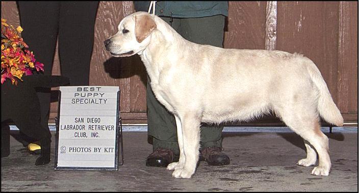 Drycreek Labradors - Hush