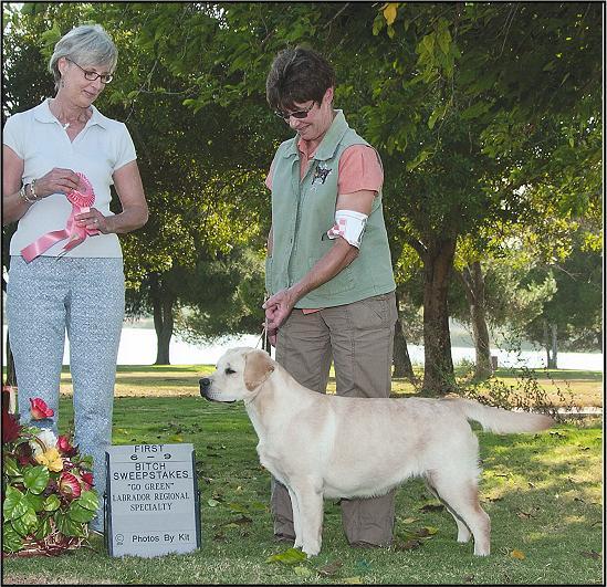 Drycreek Labradors- Hush wins