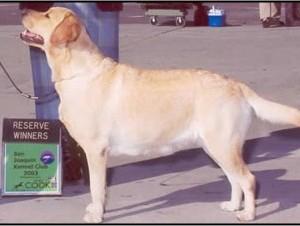 Drycreek Labradors - Jody