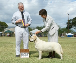 Drycreek Labradors - Lindy