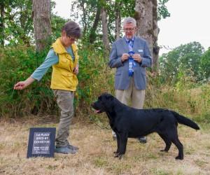 Drycreek Labradors - Ruby RCLRC