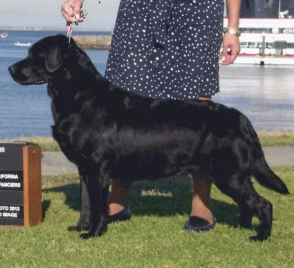 Drycreek Labradors - Hurry