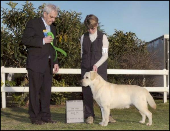 Drycreek Labradors - Golden Lab Jasper