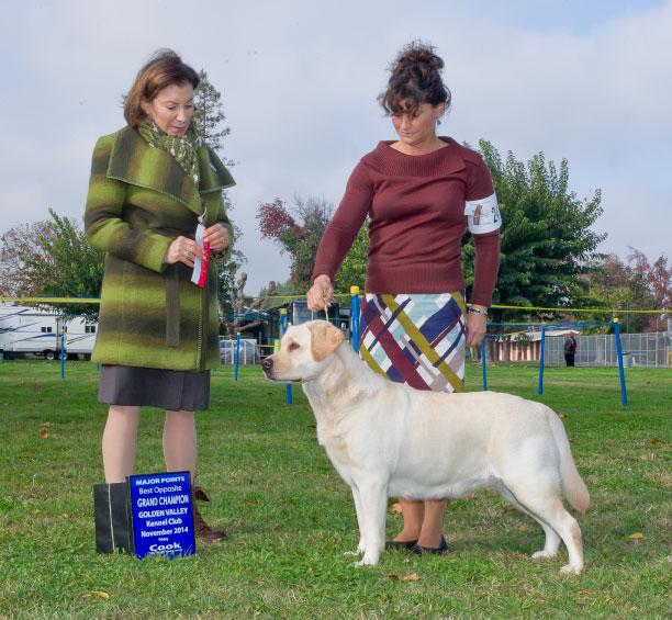 Drycreek Labradors - Lizzy