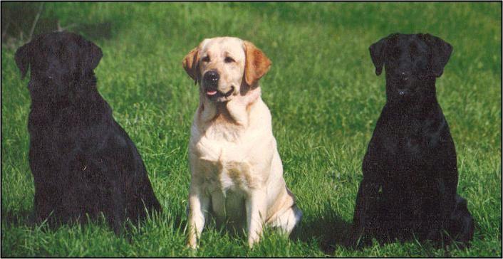 Drycreek Labradors Champions