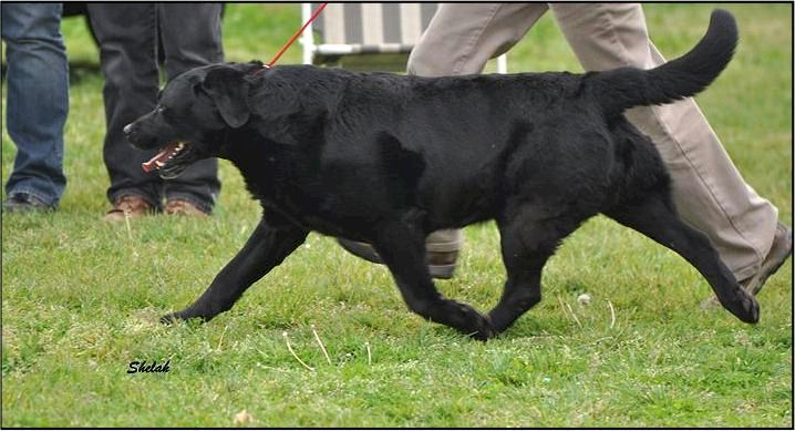 Drycreek Labradors - Slim