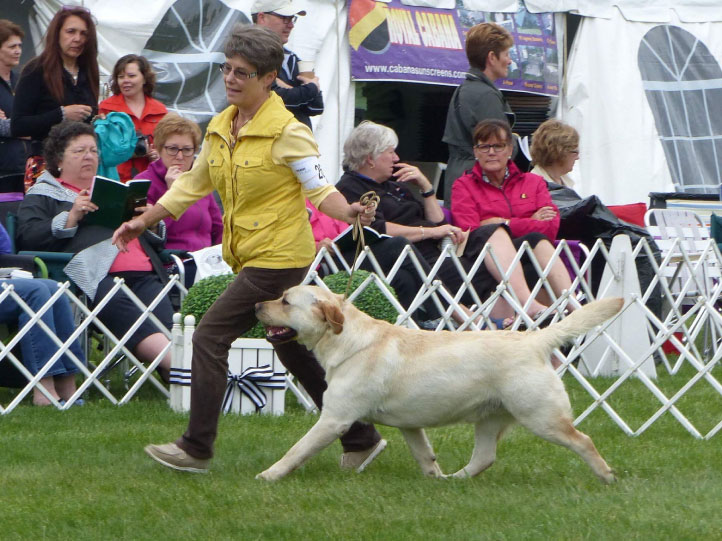 Josh at Dog Show Competition
