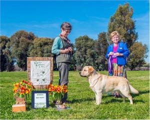 Drycreek Labradors' Bandit Wins!